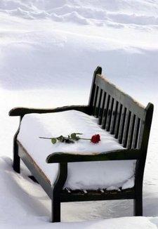 Kursi dan rose