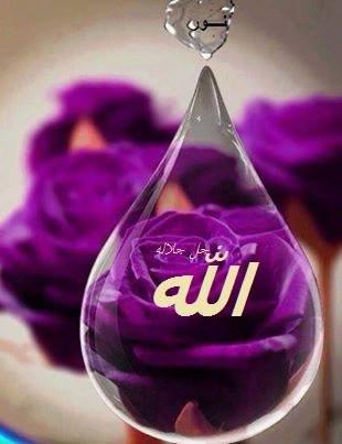 Allah embun ungu