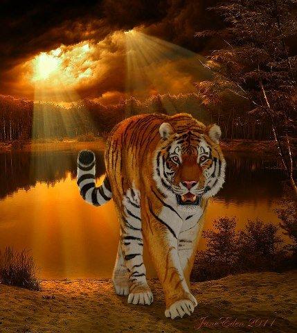 Harimau pagi