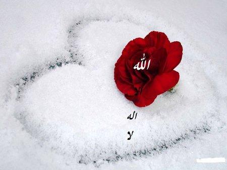 Hati Allah bunga bulu