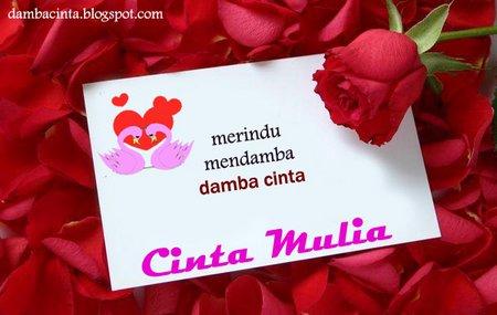Cinta mulia rose