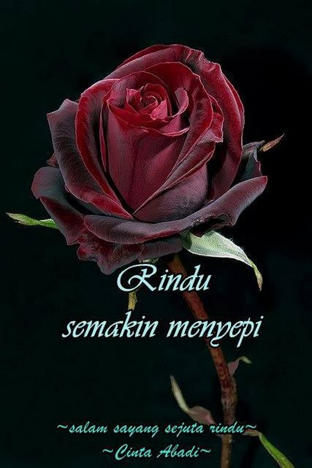 Rindu rose