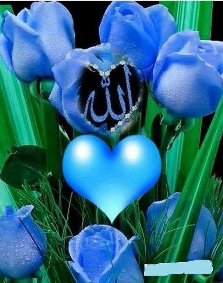 Allah rose biru1