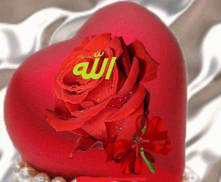 Hati Allah rose