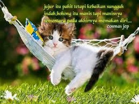 Jujur kucing