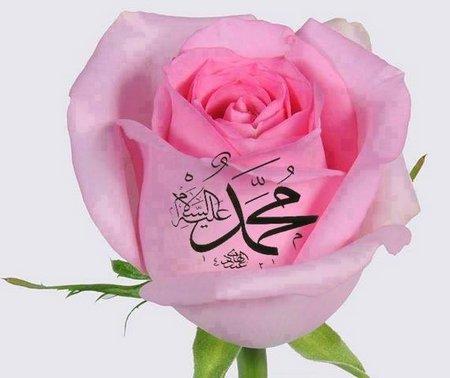 Muhammad rose pink