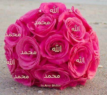 Allah rose pink 2