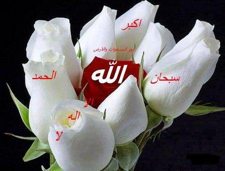 Allah rose putih 1