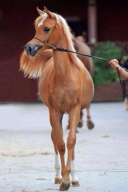 Kuda-Indah