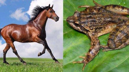 Kuda dan kodok