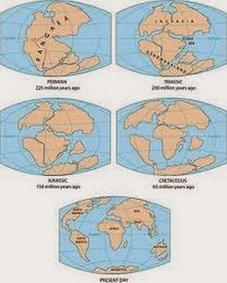 bumikerut