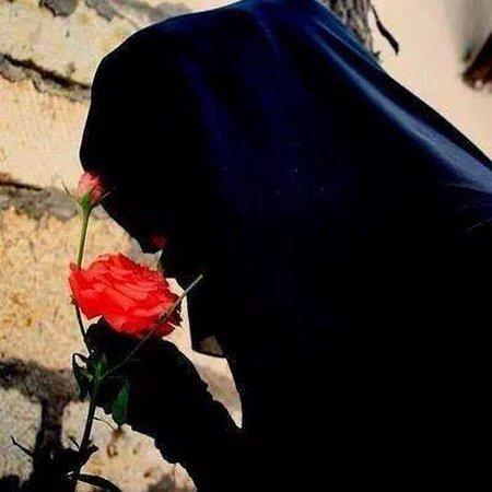 Cadar rose