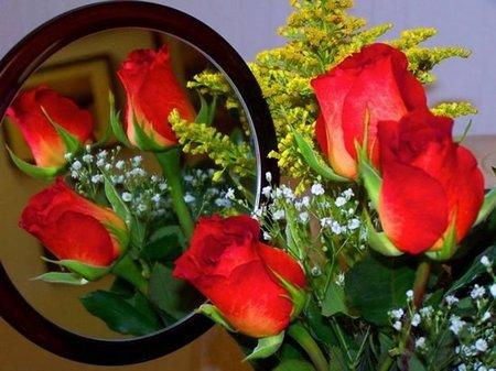 Cermin rose