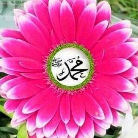 Muhammad bunga dahlia pink