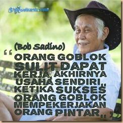 Bob goblog
