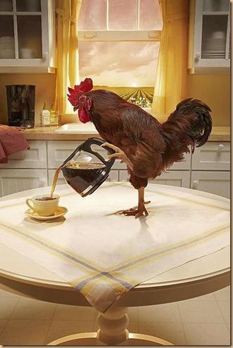 Ayam kopi